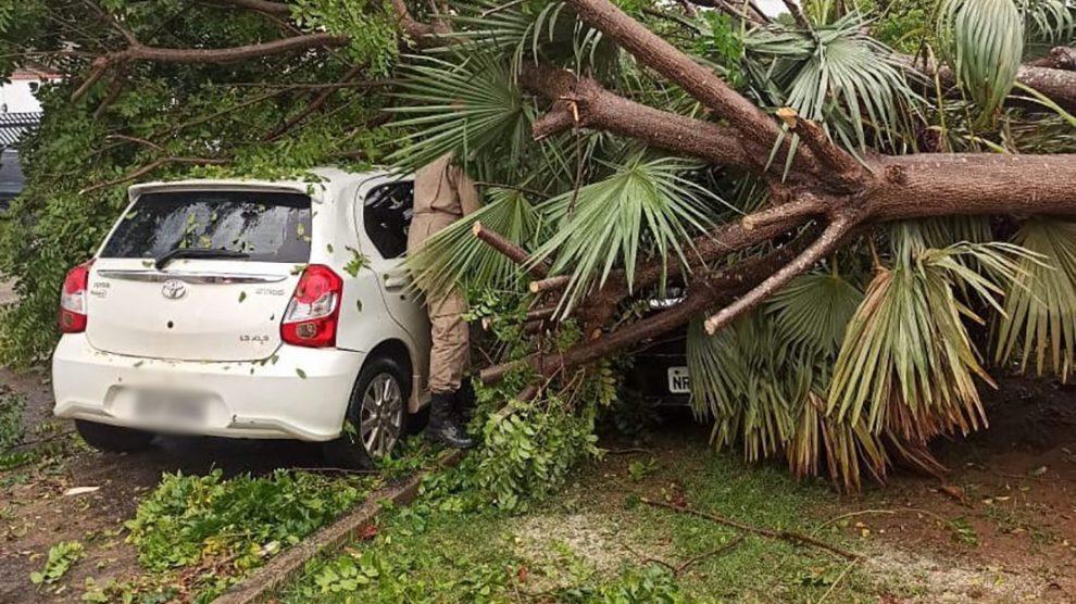 Árvores são derrubadas pelo vento no Nortão e atingem carros